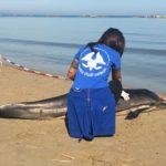 pescara-delfino-spiaggiato