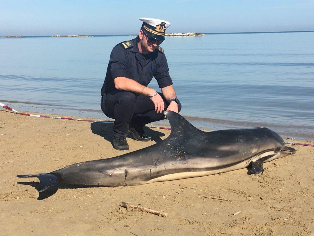 pescara-delfino-spiaggiato03