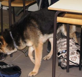 droga scuola cane