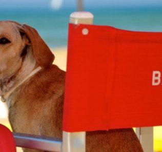 spiaggia cani
