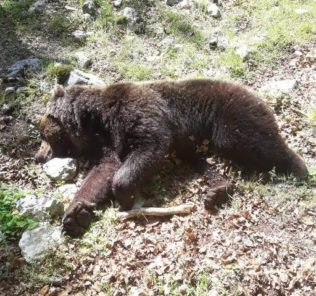 orso-morto-pnalm