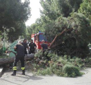 Pescara - pino crolla su strada sfiorando auto di passaggio (viale Kennedy, angolo via Zara)