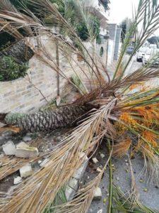 Palma cade a Silvi