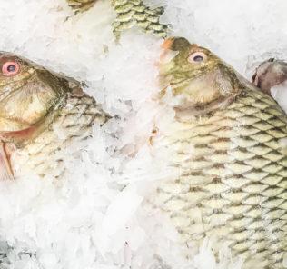 pesce-congelato (1)