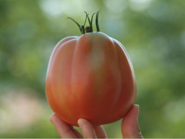 Agricoltura: pomodoro a pera riconosciuto come nuova varietà