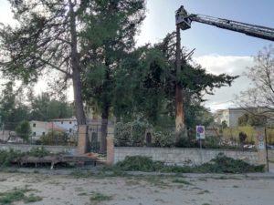 maltempo vento alberi scafa